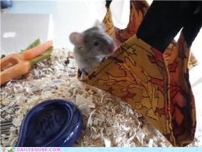 Alphonse in his Hammock