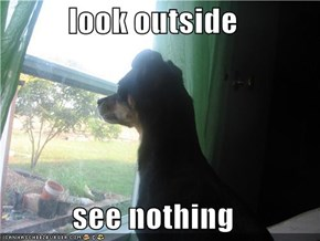 look outside  see nothing