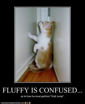 FLUFFY IS CONFUSED...