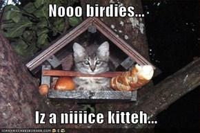 Nooo birdies...  Iz a niiiice kitteh...