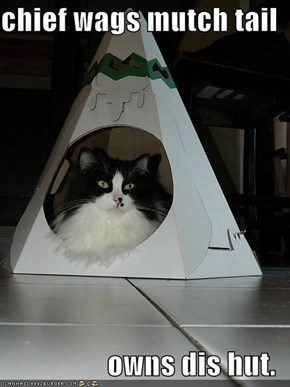 chief wags mutch tail  owns dis hut.