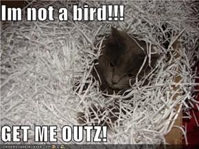 Im not a bird!!!  GET ME OUTZ!