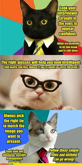 Business cat's tips for job interviews.