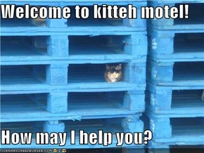 Welcome to kitteh motel!  How may I help you?