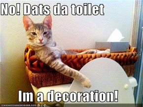 No! Dats da toilet  Im a decoration!