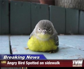 Breaking News - Angry Bird Spotted on sidewalk
