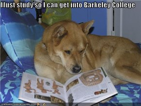 Must study so I can get into Barkeley College