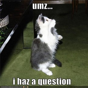 umz...  i haz a question