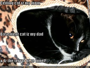 Ceiling cat iz my mom Basement cat iz my dad & Iz the terror of ze tunel!