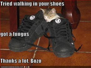 Tried walking in your shoes got a fungus Thanks a lot, Bozo