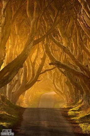 Tree Tunnel WIN