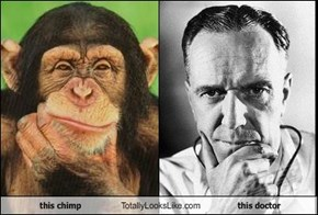 this chimp Totally Looks Like this doctor