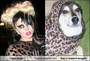 Lady Gaga Totally Looks Like Dog in leopard snuggie