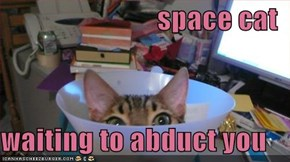 space cat  waiting to abduct you