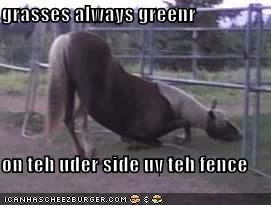 grasses always greenr  on teh uder side uv teh fence