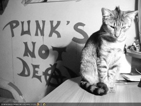 Cyoot Kitteh of teh Day: Punk Will Never Die!