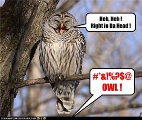 OwlsEye...I mean, BullsEye!