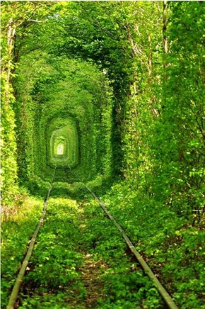 Dreamy Tree Tunnels