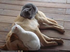 Goggies R Owr Friends: Dis Noo Bed U Bawt Us Iz Kinda Lumpee...
