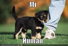 Mi  Human