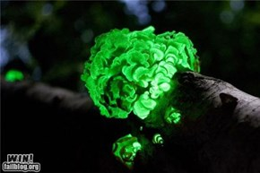 Mother Nature FTW: Glow in the Dark Fungus
