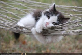 Cyoot Kitteh of teh Day: Hangin' in teh Hammock