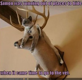 Simon was running out of places to hide  when it came time to go to the vet.