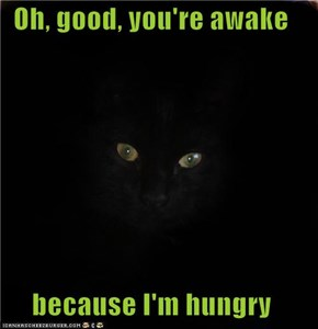 Oh, good, you're awake  because I'm hungry