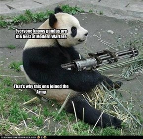 Pandas in the Military