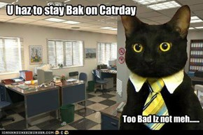 U haz a Caturday Worknday