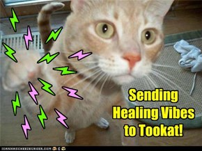 Healing Vibes for Tookat