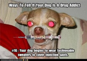 Ways  To  Tell  If  Your  Dog  Is  A  Drug  Addict