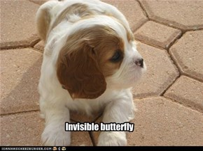 Invisible butterfly