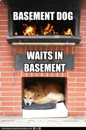 BASEMENT DOG