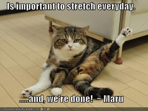 Is important to stretch everyday.  .....and, we're done!  ~ Maru