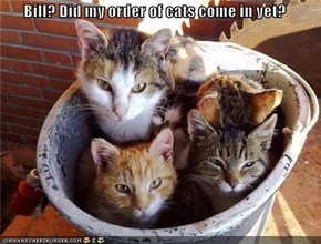 Bill? Did my order of cats come in yet?