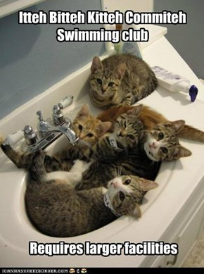 Itteh Bitteh Kitteh Commiteh Swimming club