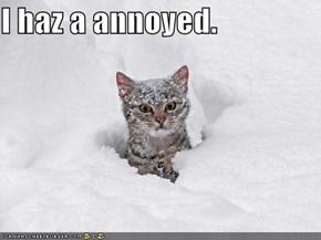 I haz a annoyed.