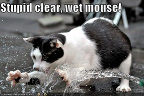 Stupid clear, wet mouse!