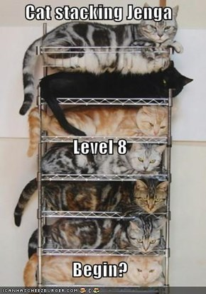 Cat stacking Jenga Level 8 Begin?