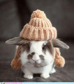 Rugged up bunneh!