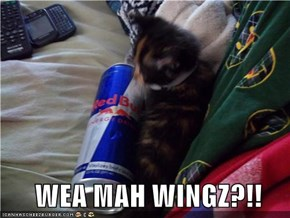 WEA MAH WINGZ?!!