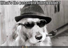 What's the password little goggie?