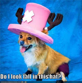 Do I look tall in this hat?