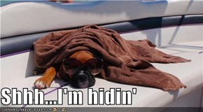 Shhh...I'm hidin'