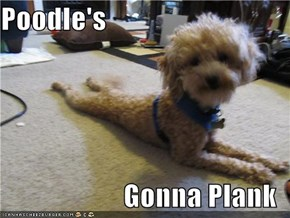 Poodle's  Gonna Plank