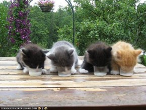 Cyoot Kittehs of teh Day: Teh Brekfast Klub