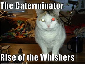 The Caterminator  Rise of the Whiskers