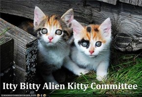 Itty Bitty Alien Kitty Committee