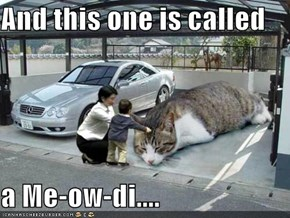 And this one is called  a Me-ow-di....